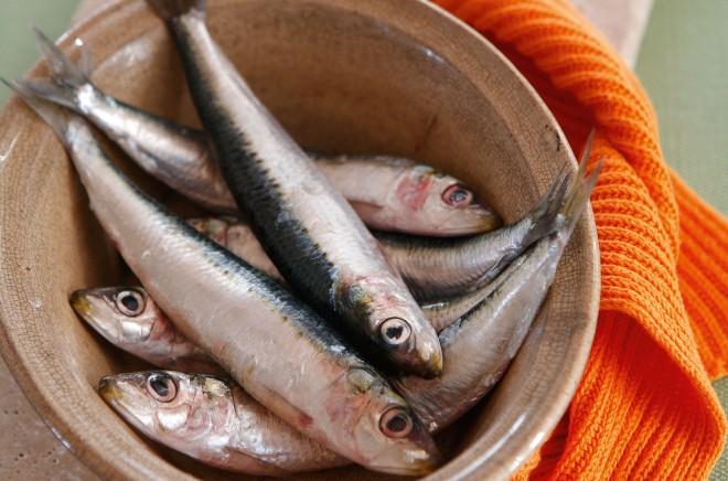 sardines WFC